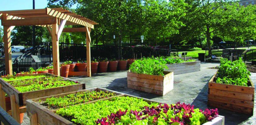 Community Learning Garden
